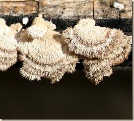 2009-08-02_mushrooms_2802 sm
