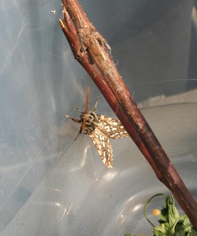 Moth cocoon identification