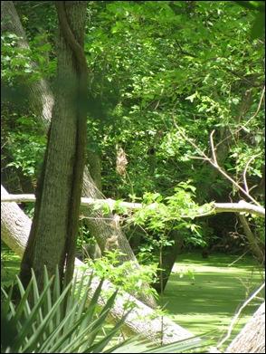 7swamp