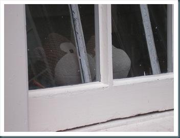 Monkeys through a window