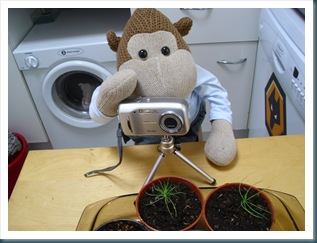 Taking pictures of seedlings
