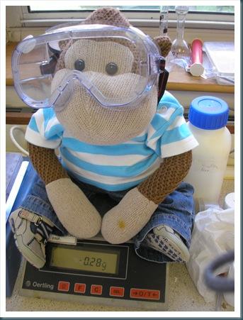 Monkey on scales