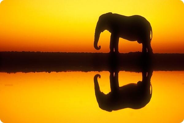 etosha_national_park_namibia_Elephant