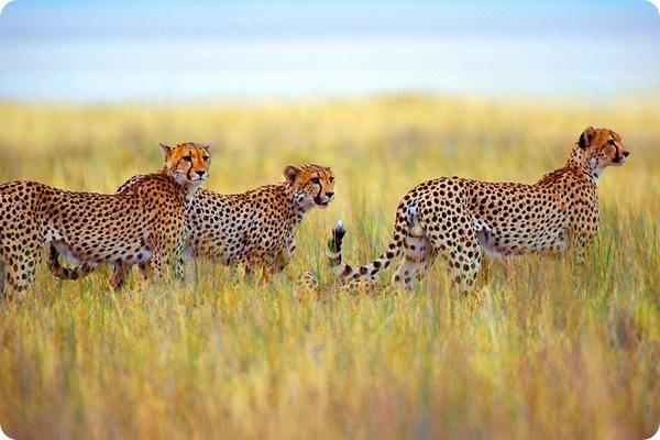 Namibia Etosha Park Foto from Natural Fotos