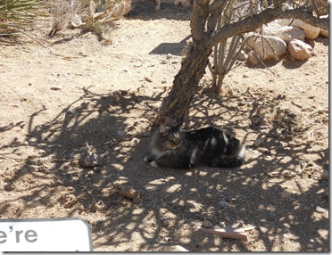 The cat in the turtle habitat at the Colossal Cave Mountain Park