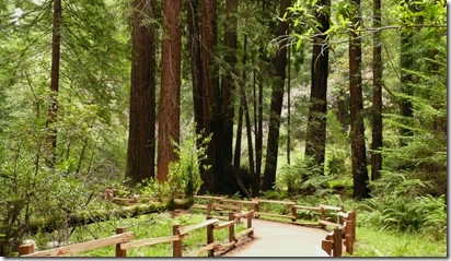 Muir Woods Path I