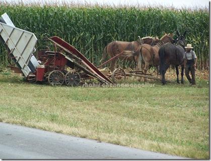 in-farm