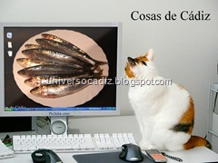 Gato-Sardinas