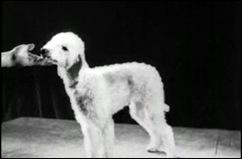 1935b