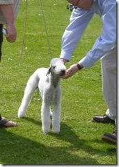 dog_show_northumberland_003