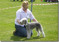 dog_show_northumberland_008