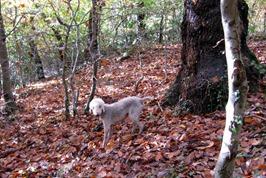 Autumn woods 061