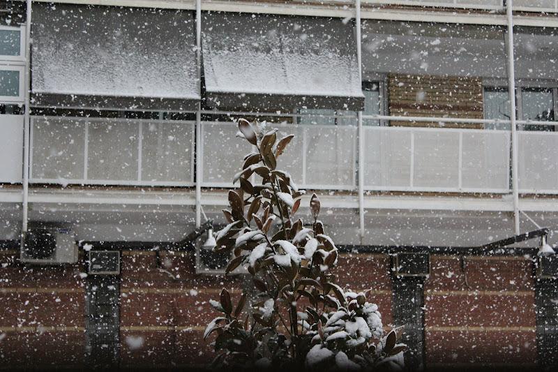 Detall de la neu sobre els arbres III