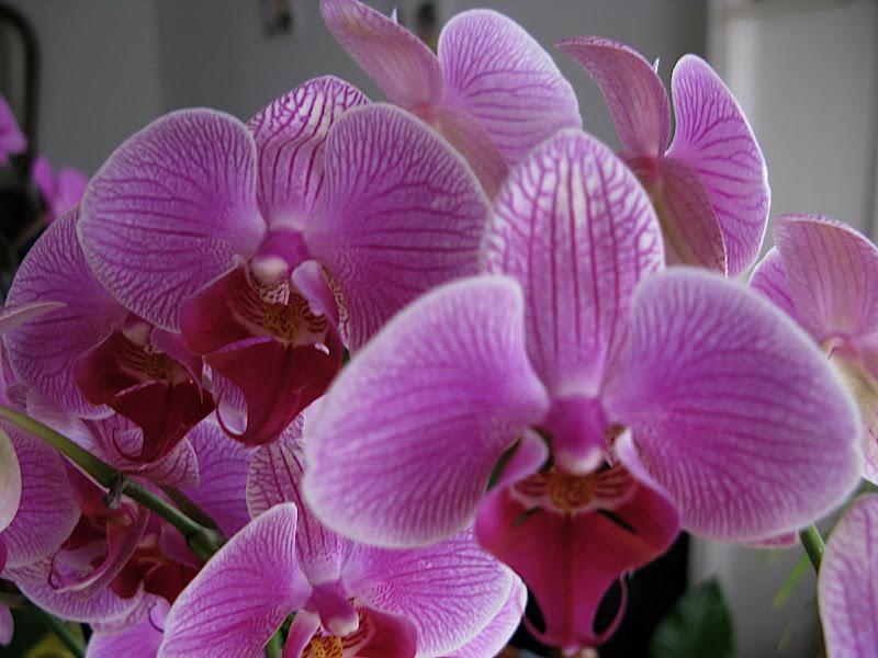 Orquídea (5)