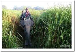 heritage%20-%20assam%20-%20kaziranga%20np%20-%20elephant%20safari%20-%20inside%20the%20elephant%20grass[1]