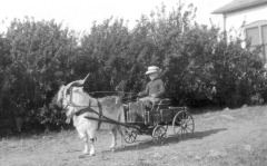 Dow with billy goat cart, 1918, 6 yrs. old