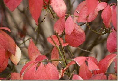 autumn 018