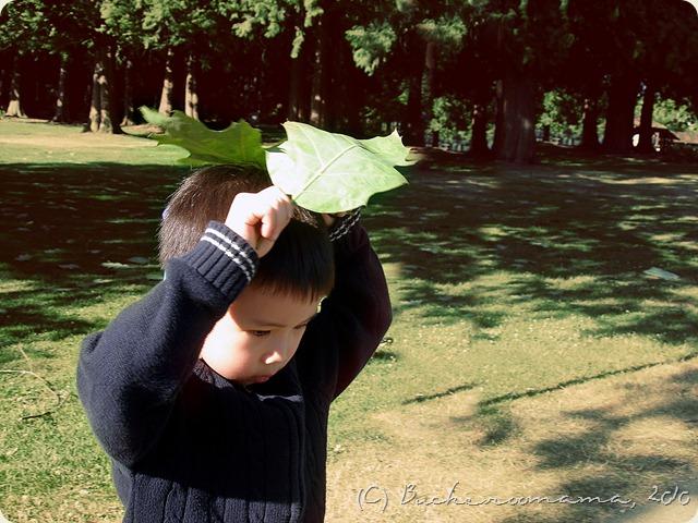 big leaf 2