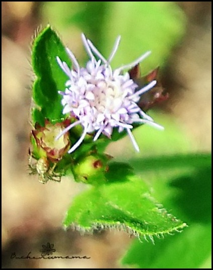 Light-purple-flower-with-bug