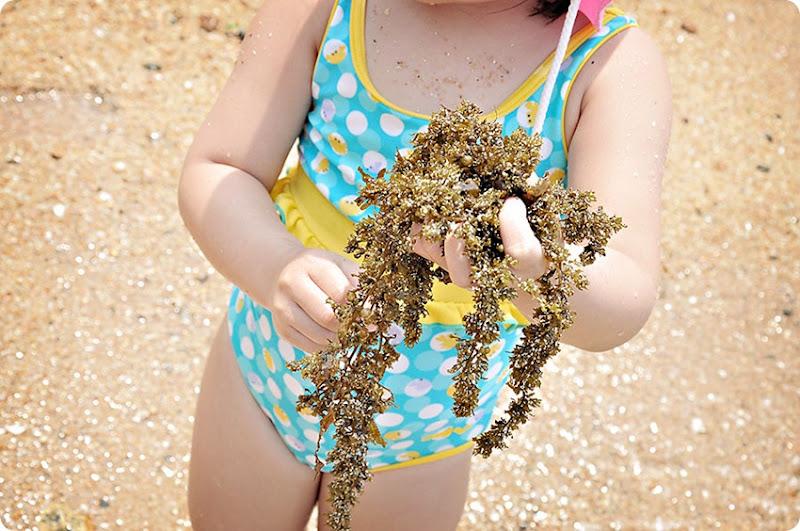 Seaweeds1
