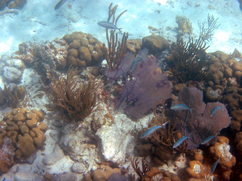 The reef here in the VI