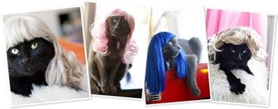 Vis cat wigs