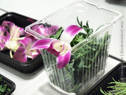 ©ManuelaViel - Orchidea commestibile