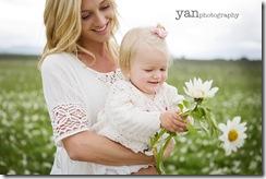 daisies-blog
