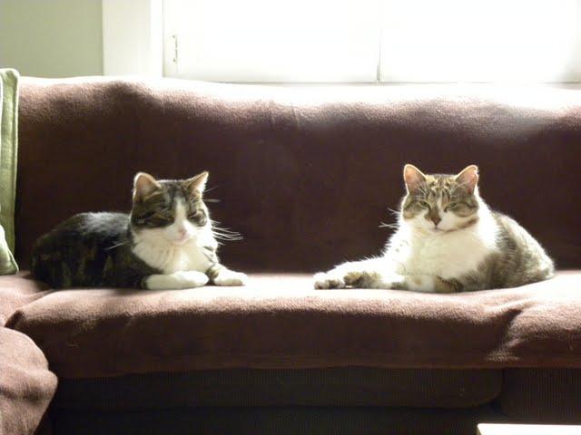 Afbeelding van Hector & Suzy(Julie)