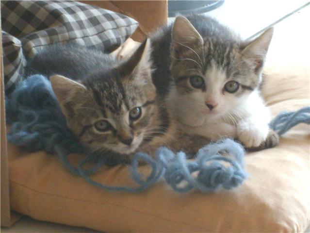 Afbeelding van Kittens van Sushi