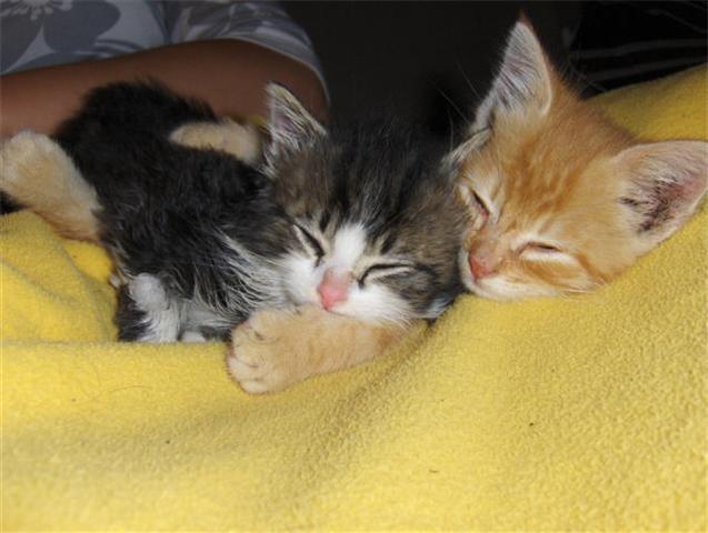Afbeelding van Wolfje en Pros als kitten