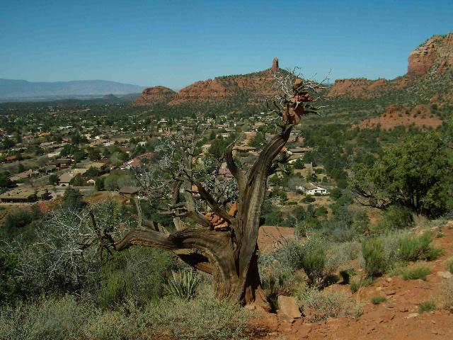 baretree&redrocks:dragoneggtrail.jpg
