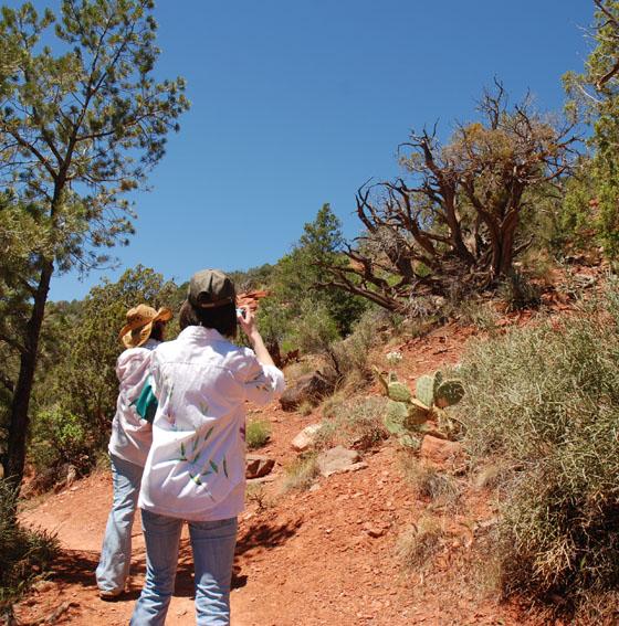 DSC_0053 erin and lauren gent photographing vortex juniper tree sedona en az.jpg