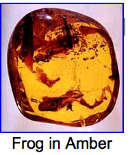 frog in amber.jpg