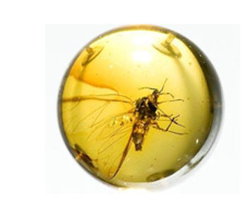 wasp in round amber droplet.jpg