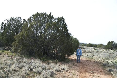 DSC_9228 marchiene standing with guardian cedar tree on trail to El Shaddai en az.jpg