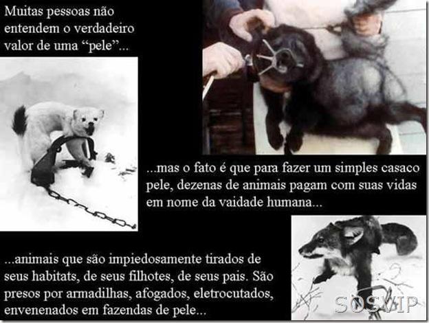 Maus tratos animais (8)