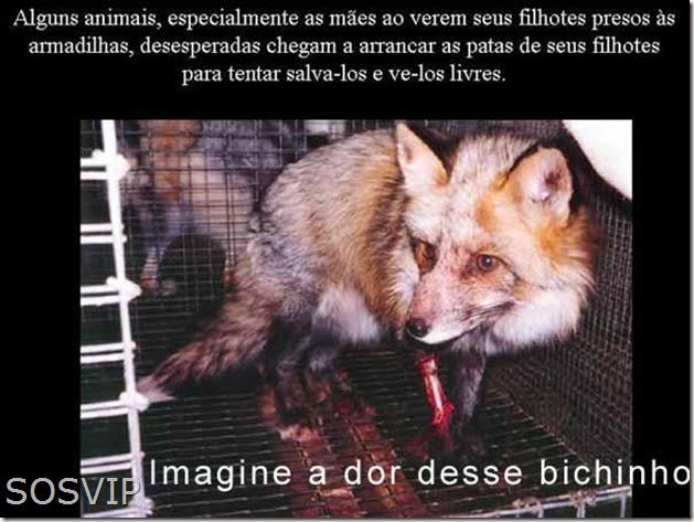 Maus tratos animais (3)