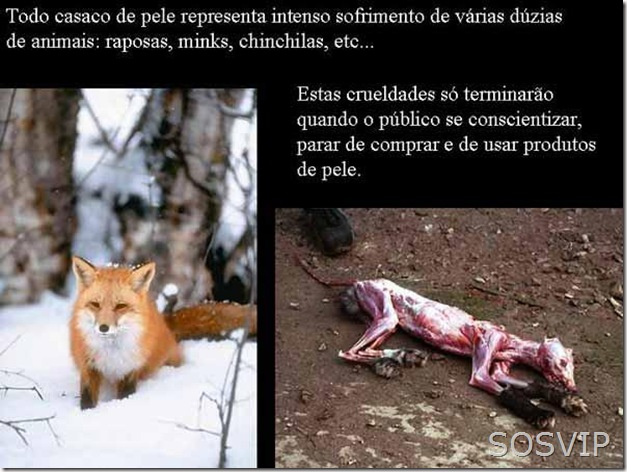 Maus tratos animais (6)