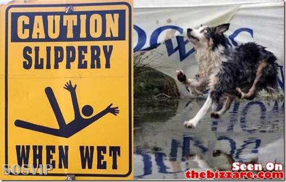 Placas Desmotivacionais - avisos engraçados.jpg (11)