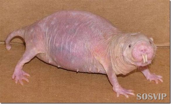 Animais estranhos criaturas awful-creatures.jpg (30)