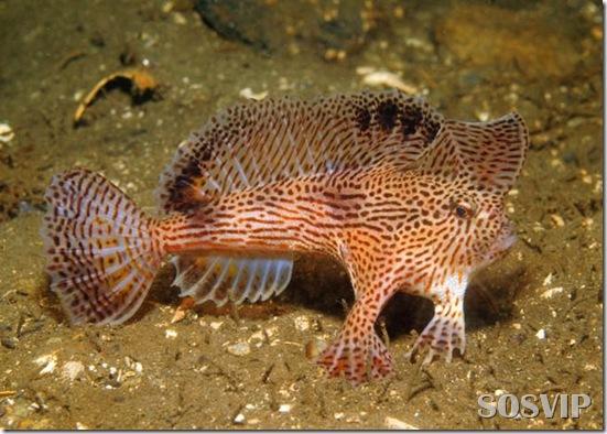 Peixes estranhos esqusitos.jpg (11)