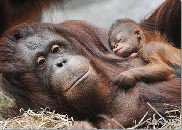 Animals baby - Bebes animais.jpg (23)