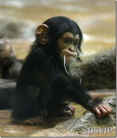 Animals baby - Bebes animais.jpg (19)