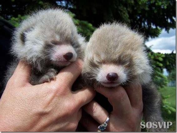 Animals baby - Bebes animais.jpg (12)