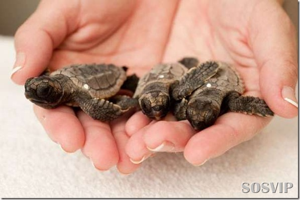 Animals baby - Bebes animais.jpg (16)