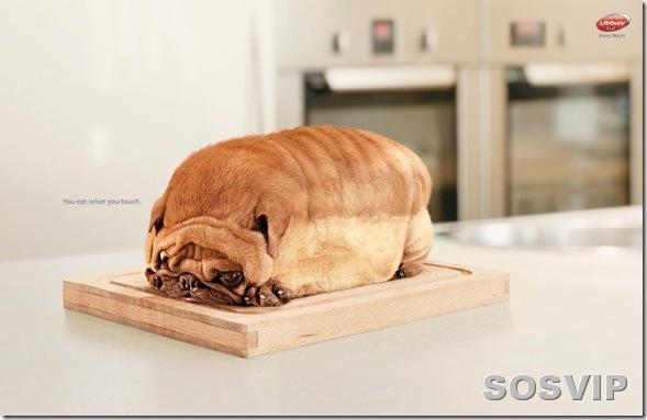 Dog Brinde - você é o que você come