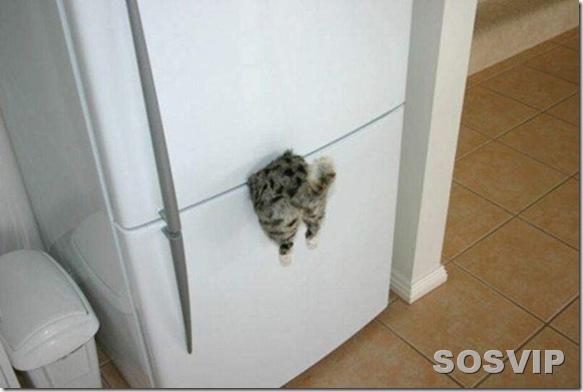funny animals engracados animais.jpg (16)