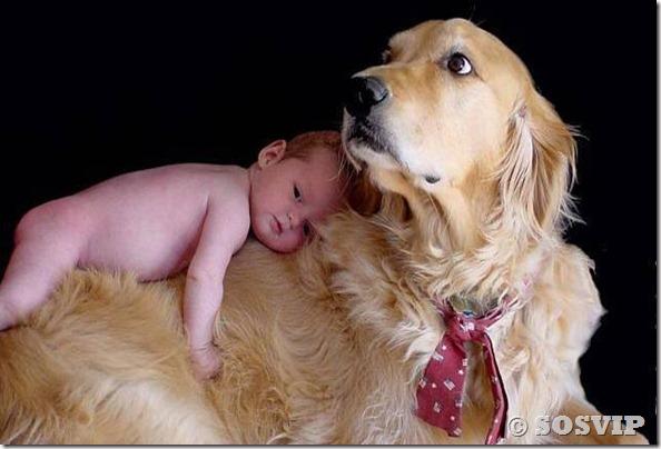 Cachorro babá a melhor babá babysitter (13)