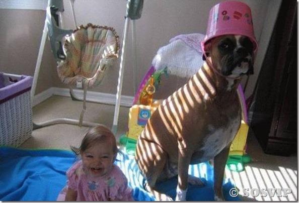 Cachorro babá a melhor babá babysitter (11)